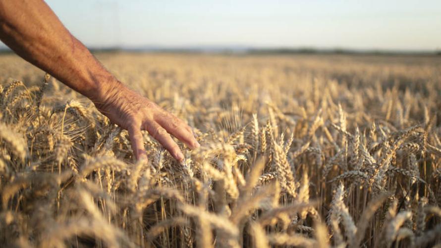 Konkursy Agencji Restrukturyzacji i Modernizacji Rolnictwa